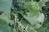 (Luffa - DNAFR000805)  @11 [ ] Copyrights (2014) Gujarat Biodiversity Gene Bank, GSBTM, DST, GoG Gujarat Biodiversity Gene Bank, GSBTM, DST, GoG