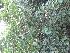( - DNAFR000829)  @11 [ ] Copyrights (2014) Gujarat Biodiversity Gene Bank, GSBTM, DST, GoG Gujarat Biodiversity Gene Bank, GSBTM, DST, GoG