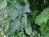 (Datura stramonium - DNAFR000830)  @11 [ ] Copyrights (2014) Gujarat Biodiversity Gene Bank, GSBTM, DST, GoG Gujarat Biodiversity Gene Bank, GSBTM, DST, GoG
