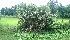 (Borassus - DNAFR000785)  @11 [ ] Copyrights (2014) Gujarat Biodiversity Gene Bank, GSBTM, DST, GoG Gujarat Biodiversity Gene Bank, GSBTM, DST, GoG