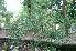 (Asparagus gonoclados - DNAFR000789)  @11 [ ] Copyrights (2014) Gujarat Biodiversity Gene Bank, GSBTM, DST, GoG Gujarat Biodiversity Gene Bank, GSBTM, DST, GoG