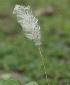 ( - DNAFR000793)  @11 [ ] Copyrights (2014) Gujarat Biodiversity Gene Bank, GSBTM, DST, GoG Gujarat Biodiversity Gene Bank, GSBTM, DST, GoG