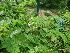 ( - DNAFR000683)  @11 [ ] Copyright (2014) Gujarat Biodiversity Gene Bank, GSBTM, DST, GoG Gujarat Biodiversity Gene Bank, GSBTM, DST, GoG