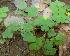 (Oxalis - DNAFR000349)  @11 [ ] Copyright (2014) Gujarat Biodiversity Gene Bank, GSBTM, DST, GoG Gujarat Biodiversity Gene Bank, GSBTM, DST, GoG