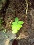 (Adiantum - DNAFR000271)  @11 [ ] Copyright (2014) Gujarat Biodiversity Gene Bank, GSBTM, DST, GoG Gujarat Biodiversity Gene Bank, GSBTM, DST, GoG