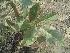 (Stereospermum - DNAFR000354)  @11 [ ] Copyright (2014) Gujarat Biodiversity Gene Bank, GSBTM, DST, GoG Gujarat Biodiversity Gene Bank, GSBTM, DST, GoG