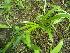 (Pancratium - DNAFR000326)  @11 [ ] Copyright (2014) Gujarat Biodiversity Gene Bank, GSBTM, DST, GoG Gujarat Biodiversity Gene Bank, GSBTM, DST, GoG