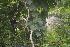 (Pueraria - DNAFR000210)  @11 [ ] Copyright (2014) Gujarat Biodiversity Gene Bank, GSBTM, DST, GoG Gujarat Biodiversity Gene Bank, GSBTM, DST, GoG