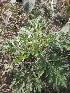 (Thladiantha - DNAFR000626)  @11 [ ] Copyright (2014) Gujarat Biodiversity Gene Bank, GSBTM, DST, GoG Gujarat Biodiversity Gene Bank, GSBTM, DST, GoG