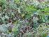 (Colocasia - DNAFR000380)  @11 [ ] Copyright (2014) Gujarat Biodiversity Gene Bank, GSBTM, DST, GoG Gujarat Biodiversity Gene Bank, GSBTM, DST, GoG