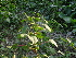 (Amaranthus spinosus - DNAFR000382)  @11 [ ] Copyright (2014) Gujarat Biodiversity Gene Bank, GSBTM, DST, GoG Gujarat Biodiversity Gene Bank, GSBTM, DST, GoG
