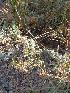 (Cressa - DNAFR000390)  @11 [ ] Copyright (2014) Gujarat Biodiversity Gene Bank, GSBTM, DST, GoG Gujarat Biodiversity Gene Bank, GSBTM, DST, GoG
