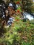 (Mukia - DNAFR000641)  @11 [ ] Copyright (2014) Gujarat Biodiversity Gene Bank, GSBTM, DST, GoG Gujarat Biodiversity Gene Bank, GSBTM, DST, GoG