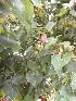 (Lagenaria - DNAFR000642)  @11 [ ] Copyright (2014) Gujarat Biodiversity Gene Bank, GSBTM, DST, GoG Gujarat Biodiversity Gene Bank, GSBTM, DST, GoG