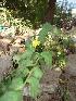 ( - DNAFR000654)  @11 [ ] Copyright (2014) Gujarat Biodiversity Gene Bank, GSBTM, DST, GoG Gujarat Biodiversity Gene Bank, GSBTM, DST, GoG
