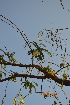 (Sesbania - DNAFR000546)  @11 [ ] Copyright (2014) Gujarat Biodiversity Gene Bank, GSBTM, DST, GoG Gujarat Biodiversity Gene Bank, GSBTM, DST, GoG
