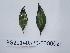 ( - DNAFR000721)  @11 [ ] Copyrights (2014) Gujarat Biodiversity Gene Bank, GSBTM, DST, GoG Gujarat Biodiversity Gene Bank, GSBTM, DST, GoG