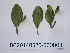 ( - DNAFR000722)  @11 [ ] Copyrights (2014) Gujarat Biodiversity Gene Bank, GSBTM, DST, GoG Gujarat Biodiversity Gene Bank, GSBTM, DST, GoG