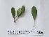 ( - DNAFR000725)  @11 [ ] Copyrights (2014) Gujarat Biodiversity Gene Bank, GSBTM, DST, GoG Gujarat Biodiversity Gene Bank, GSBTM, DST, GoG