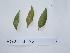 ( - DNAFR000726)  @11 [ ] Copyrights (2014) Gujarat Biodiversity Gene Bank, GSBTM, DST, GoG Gujarat Biodiversity Gene Bank, GSBTM, DST, GoG