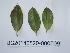 ( - DNAFR000728)  @11 [ ] Copyrights (2014) Gujarat Biodiversity Gene Bank, GSBTM, DST, GoG Gujarat Biodiversity Gene Bank, GSBTM, DST, GoG