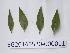 ( - DNAFR000729)  @11 [ ] Copyrights (2014) Gujarat State Biotechnology Mission Gujarat State Biotechnology Mission