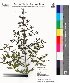 ( - DNAFR000031)  @11 [ ] Copyright (2011) Gujarat Biodiversity Gene Bank Gujarat Biodiversity Gene Bank