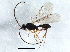 (Diapriidae - BIOUG04151-C07)  @15 [ ] CreativeCommons - Attribution Non-Commercial Share-Alike (2013) BIO Photography Group Biodiversity Institute of Ontario
