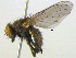 (Pegomya - BIOUG04464-E08)  @14 [ ] CreativeCommons - Attribution Non-Commercial Share-Alike (2013) BIO Photography Group Biodiversity Institute of Ontario