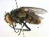 (Distichona - BIOUG04381-F12)  @14 [ ] CreativeCommons - Attribution Non-Commercial Share-Alike (2013) BIO Photography Group Biodiversity Institute of Ontario