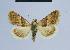 ( - BC ZSM Lep 54599)  @13 [ ] Copyright (2014) Axel Hausmann/Bavarian State Collection of Zoology (ZSM) Bavarian State Collection of Zoology