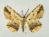 ( - RCIM 0029)  @14 [ ] Copyright (2010) Iva Mihoci Croatian Natural History Museum