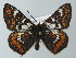  (Euphydryas cynthia - BC ZSM Lep 62384)  @14 [ ] Axel Hausmann/Bavarian State Collection of Zoology (ZSM) (2012) Axel Hausmann/Bavarian State Collection of Zoology (ZSM) Bavarian State Collection of Zoology