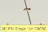 (Dolichoderus lugens - MEPN Troya For 00050)  @11 [ ] Copyright (2012) Adrian Troya MEPN