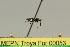 (Dolichoderus superaculus - MEPN Troya For 00053)  @11 [ ] Copyright (2012) Adrian Troya MEPN