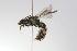 (Ruizanthedella - MACN-En 9851)  @13 [ ] Copyright (2012) MACN Museo Argentino de Ciencias Naturales