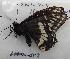 (Papilio indra - 604NK-DT3)  @13 [ ] Unspecified (default): All Rights Reserved  Unspecified Unspecified
