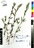 ( - C-L_R-0077)  @11 [ ] CreativeCommons - Attribution Non-Commercial Share-Alike (2012) Mamadi Theresa Sethusa University of Johannesburg
