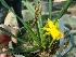 (Narcissus - Hosam00337)  @11 [ ] Copyright (2013) Dr. Hosam Elansary Alexandria University