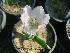 (Tulipa - Hosam00339)  @11 [ ] Copyright (2013) Dr. Hosam Elansary Alexandria University