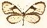 (Heterosais - CORBIDI AR-003249)  @11 [ ] Copyright (2010) CORBIDI Centro de Ornitologia y Biodiversidad