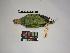 (Amazona amazonica - IAvH-CT 14559)  @11 [ ] CreativeCommons – Attribution Share-Alike (by-sa) (2014) Unspecified Instituto de Investigacion de Recursos Biologicos Alexander von Humboldt