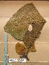 (Hallea - WH213a_293)  @11 [ ] CreativeCommons - Attribution Non-Commercial Share-Alike (2013) Unspecified Herbarium de l'Université Libre de Bruxelles
