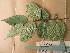 (Didelotia - WH213a_390)  @11 [ ] CreativeCommons - Attribution Non-Commercial Share-Alike (2013) Unspecified Herbarium de l'Université Libre de Bruxelles