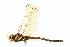 (Cordulegastridae - BIOUG02812-C01)  @14 [ ] CreativeCommons - Attribution Non-Commercial Share-Alike (2012) BIO Photography Group Biodiversity Institute of Ontario