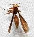 "(Polistes cavapyta - MACN-Bar-Ins-ct 00606)  @14 [ ] Copyright (2011) MACN Museo Argentino de Ciencias Naturales ""Bernardino Rivadavia"""