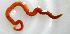 ( - UNMdP-ZINV-115)  @11 [ ] CreativeCommons – Attribution Non-Commercial Share-Alike (2014) Unspecified Laboratorio de Zoología de Invertebrados