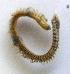 (Kinbergonuphis - UNMdP-ZINV-128)  @11 [ ] CreativeCommons – Attribution Non-Commercial Share-Alike (2014) Unspecified Laboratorio de Zoología de Invertebrados
