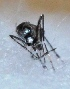 (Aedes W-albus - V1LO13)  @12 [ ] Copyright (2013) Dr.G.D. Khedkar Paul Hebert Center for DNA Barcoding & Biodiversity Studies