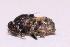 (Drosophila imparisetae - W5BH63)  @12 [ ] Copyright (2013) Dr.G.D. Khedkar Paul Hebert Center for DNA Barcoding & Biodiversity Studies